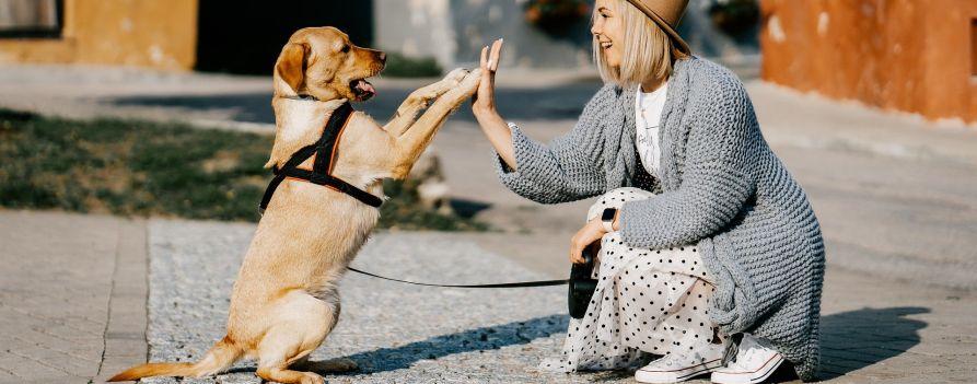 Pies przybijający przysłowiową piątkę z kobietą, która jest obok